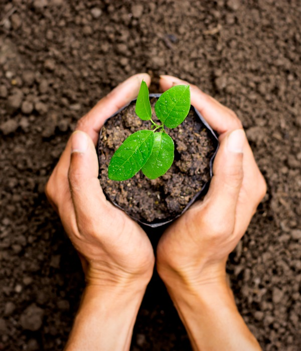 Plantar Árbol
